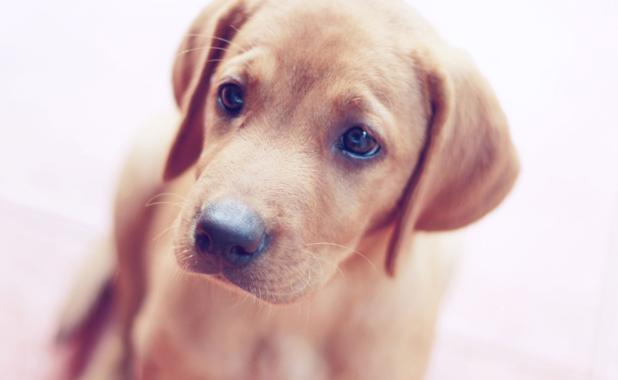 Dog-dogs-32509010-3888-2592