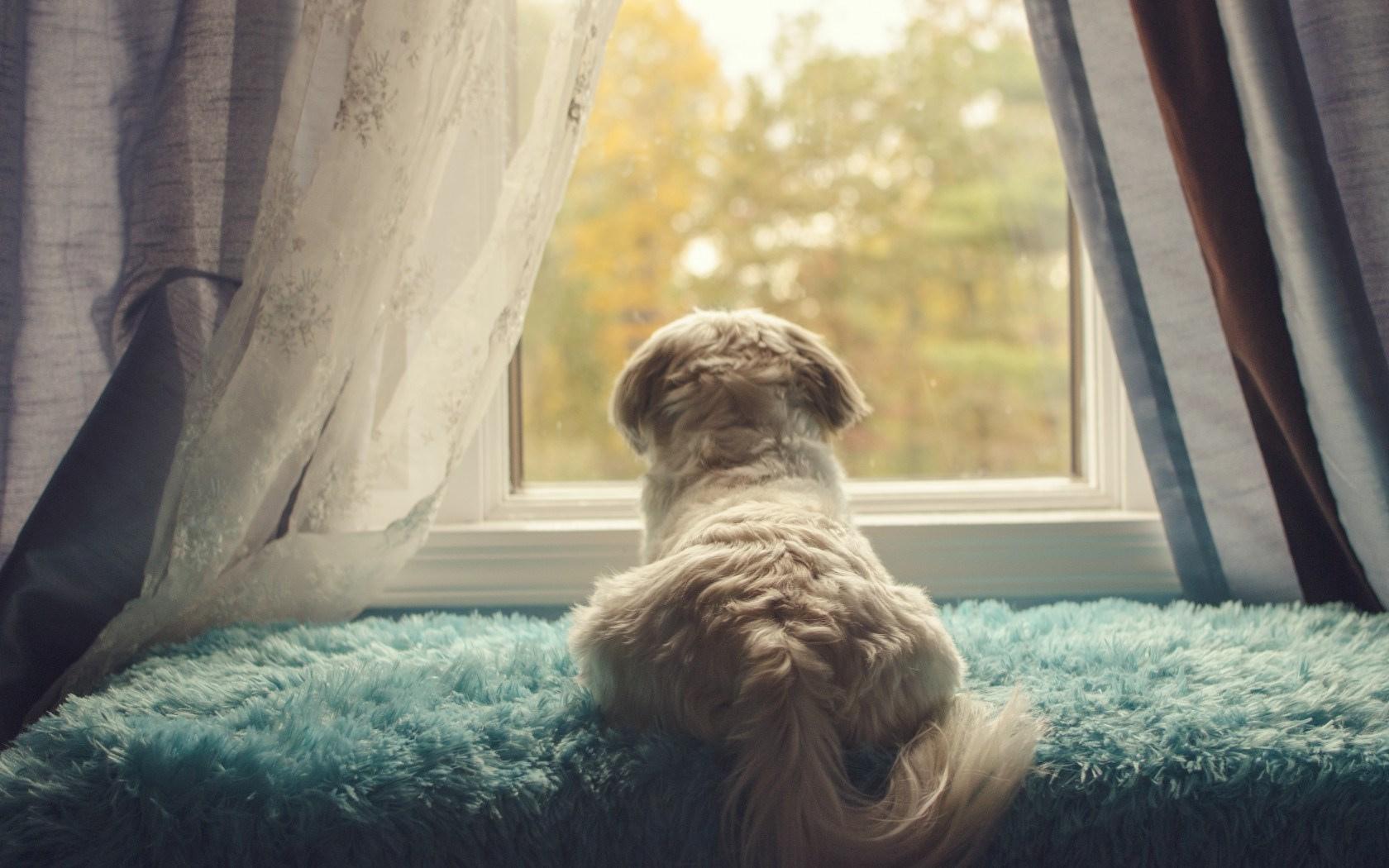 dog-window-dreaming-wallpaper-1680x1050